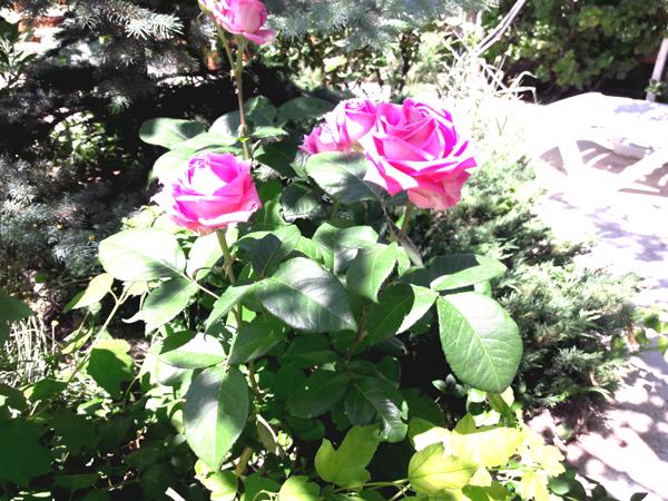 цветы на клумбе частный дом отдыха у натали